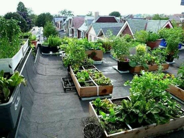 Roof top garden dwelling pinterest huerto casero for Huerto en azotea