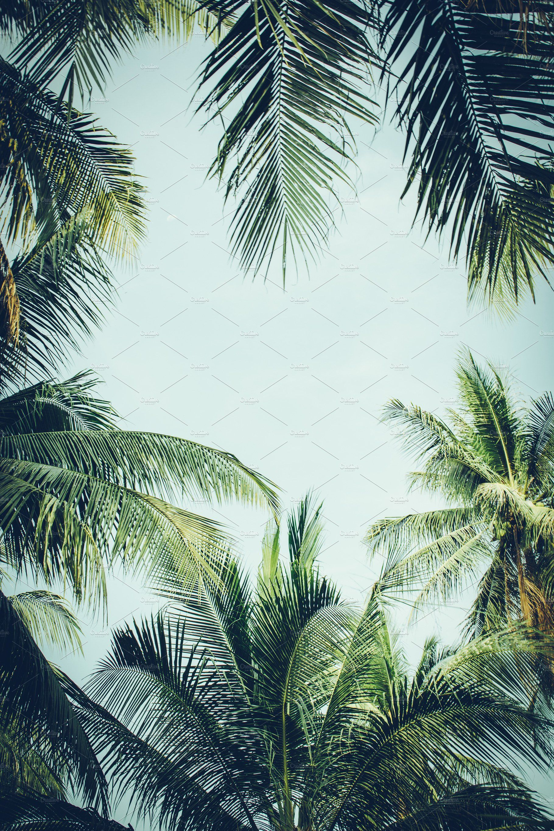 192b2457 Tropical Vibes Background by Abstract Vanilla on @creativemarket Tropical  Background, Coconut Palm Tree,