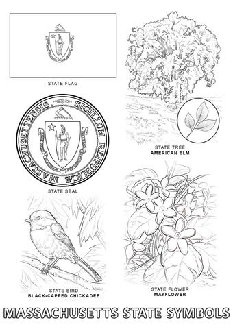 Massachusetts State Symbols Coloring Page State Symbols