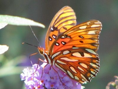 Homemade Butterfly Feeder to Attract Butterflies