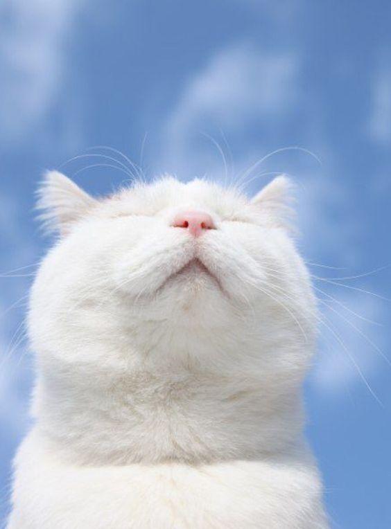 Halsentzündung Katze