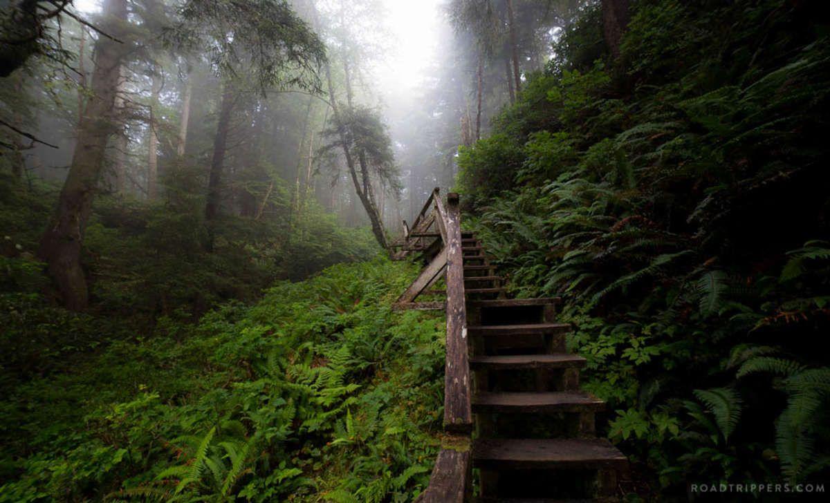 Pacific Rim National Park Reserve