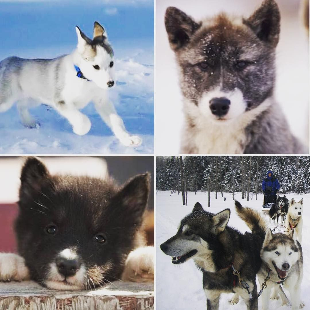 What Dog Are You Dog Lovers Dogs Instagram Dogs