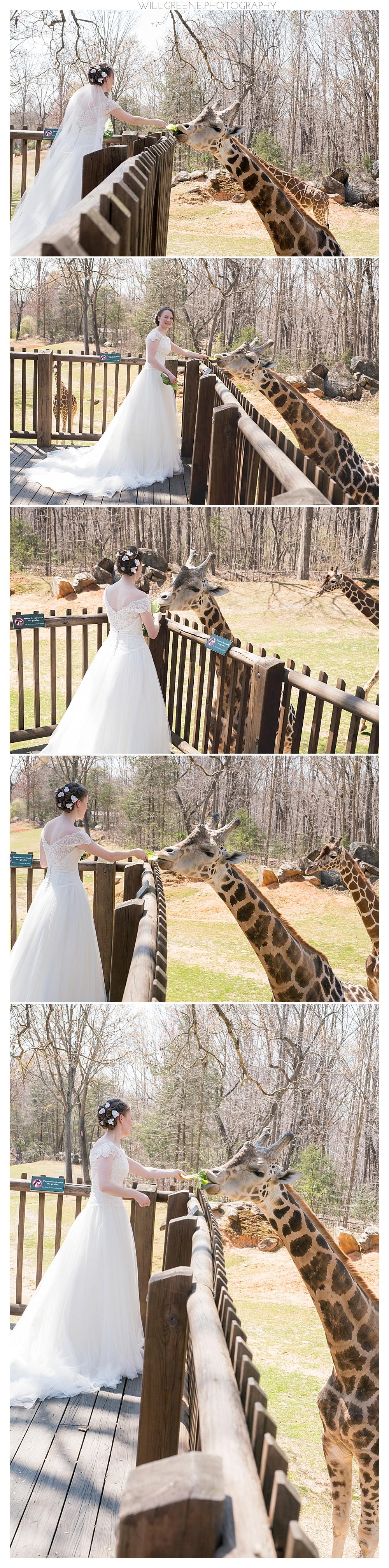 Molly's Nc Zoo Bridal Session Asheboro Will Greene Photography: Asheboro Nc Wedding Venues At Websimilar.org