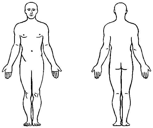 Outline Of Human Body Front And Back Ukrandiffusion