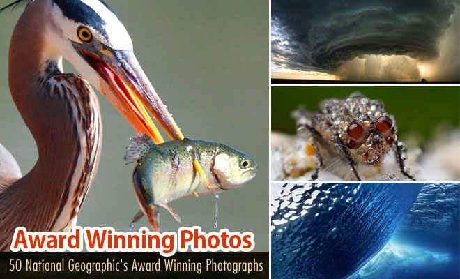 50 National Geographic Photos - Award Winning Photography Examples. Read full article: http://webneel.com/webneel/blog/50-national-geographics-photography-contest-photographs-best-photography-showcase | more http://webneel.com/wildlife-photography | Follow us www.pinterest.com/webneel