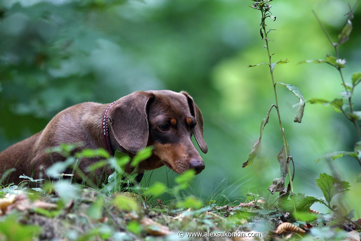 Pin By Lu On Sausage Dogs Dog Quotes Pet Quotes Dog Animals