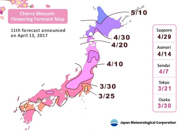 2021 Japan Cherry Blossom Forecast Jrailpass Japan Cherry Blossom Japan Travel