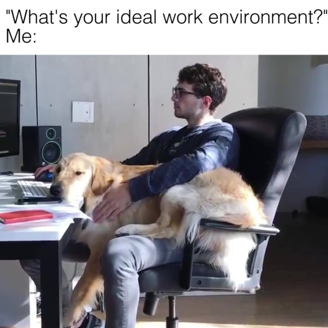 Works Best With A Lap Dog Onopromo Onofriends Onocrew Goodbowl Greatbowl Funny Animal Memes Animal Memes Work Memes