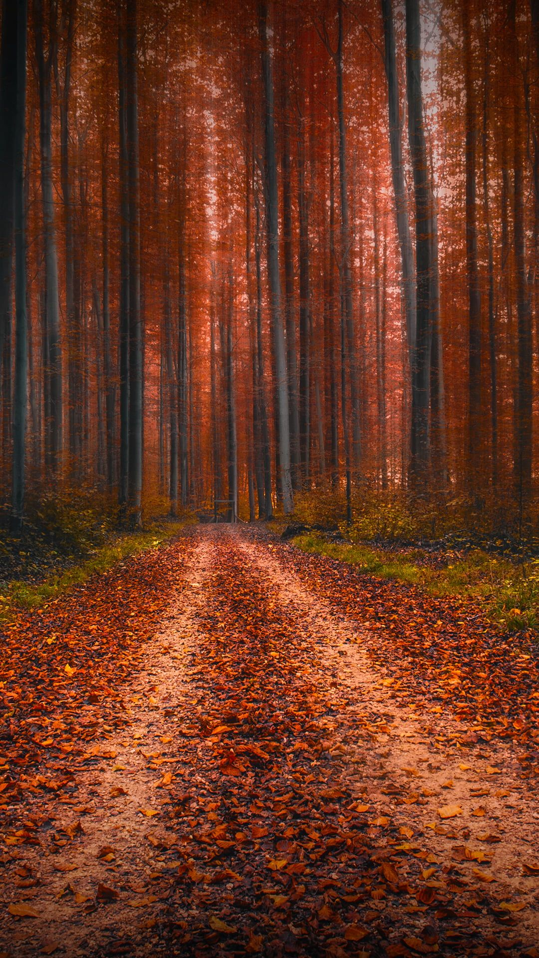 Brown And Black Area Rug Nature Landscape Portrait Display Leaves Fallen Leaves Dirt Road Trees Forest Fall 1080p Wallpaper Lonely Art Nature Landscape