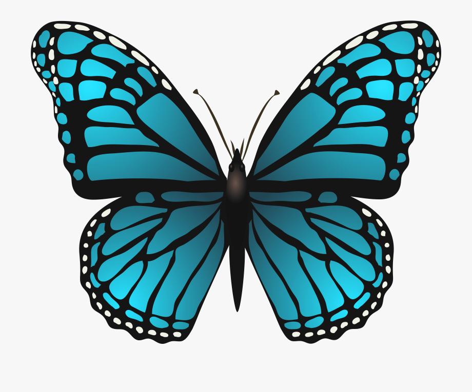 Blue Butterfly Clipart Png Butterfly Clip Art Blue Butterfly Butterfly Illustration