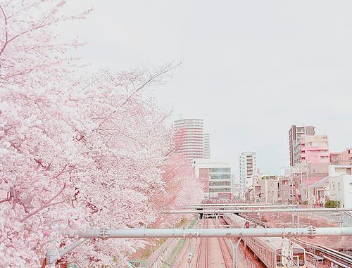 Cherry Blossom City Japan Pink Pretty Romantic Sakura Tokyo