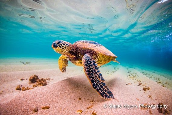 Aluminum/Canvas Fine Art print of Hawaiian Green Sea