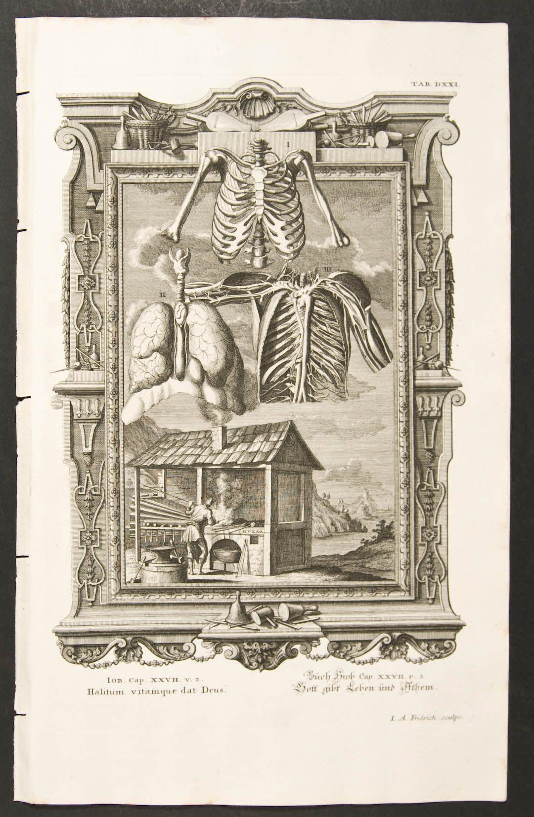 Skeleton, Organs, & Man using Smoking Hut | Anatomie | Pinterest ...
