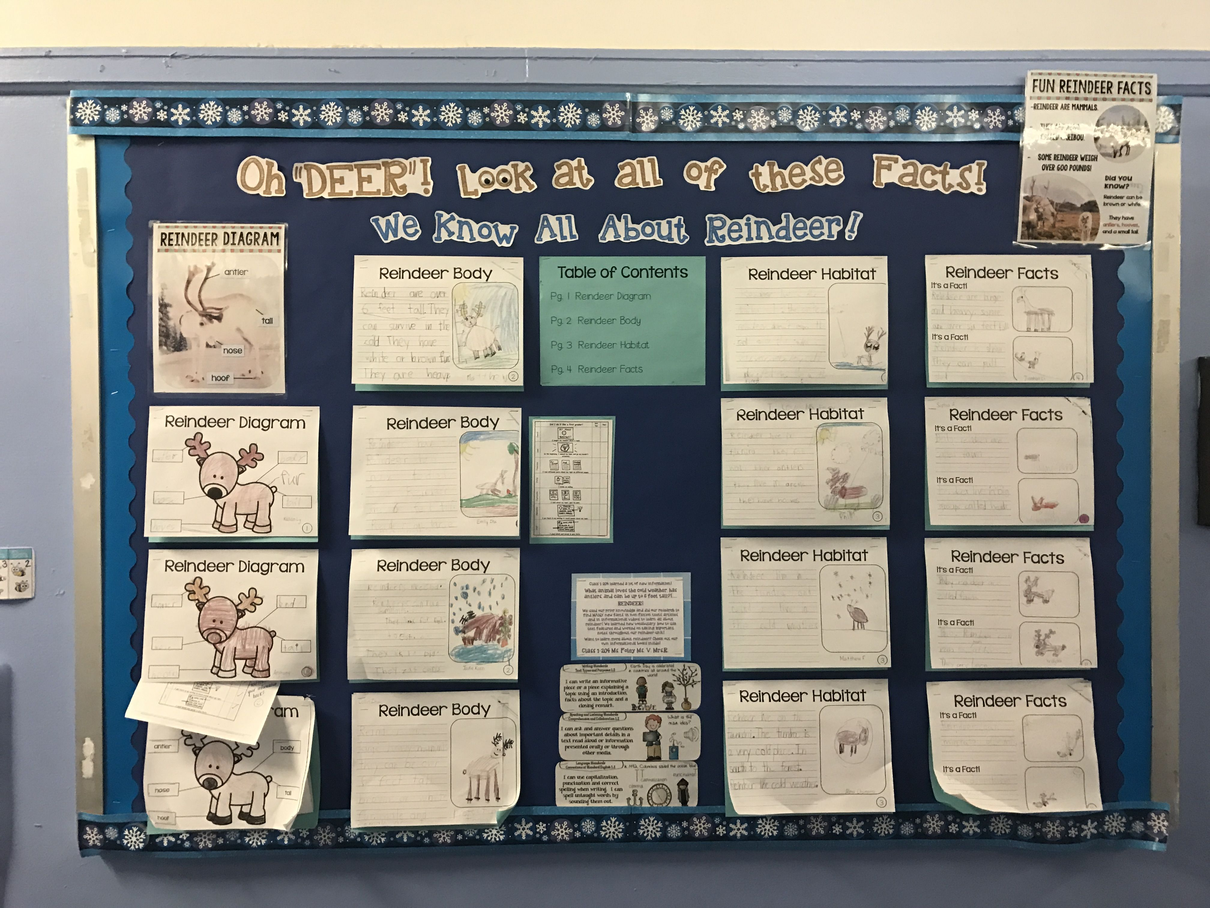 Nonfiction Reindeer Facts Bulletin Board