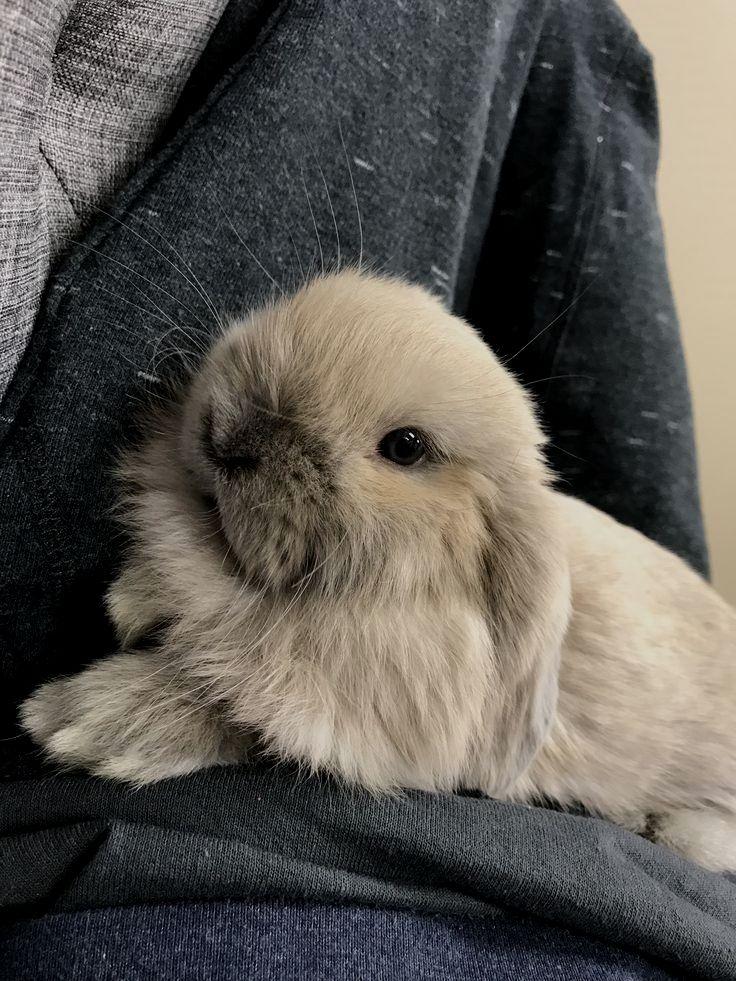 Pin Von Anna Wi Auf Cuties In 2020 Tierbabys Bilder Kaninchen Susse Tiere