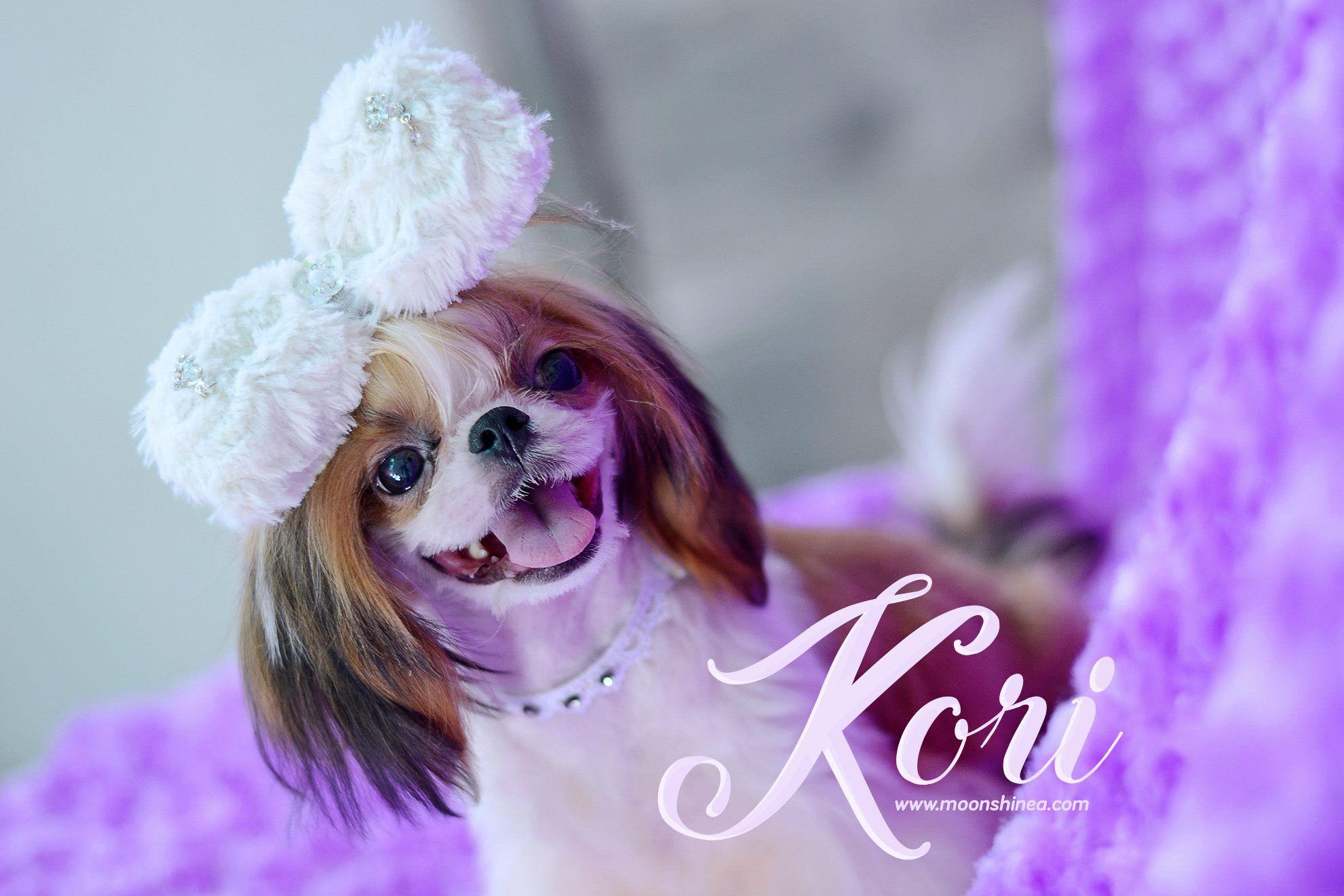 Adorable shih tzu puppies philippines shih tzu puppy