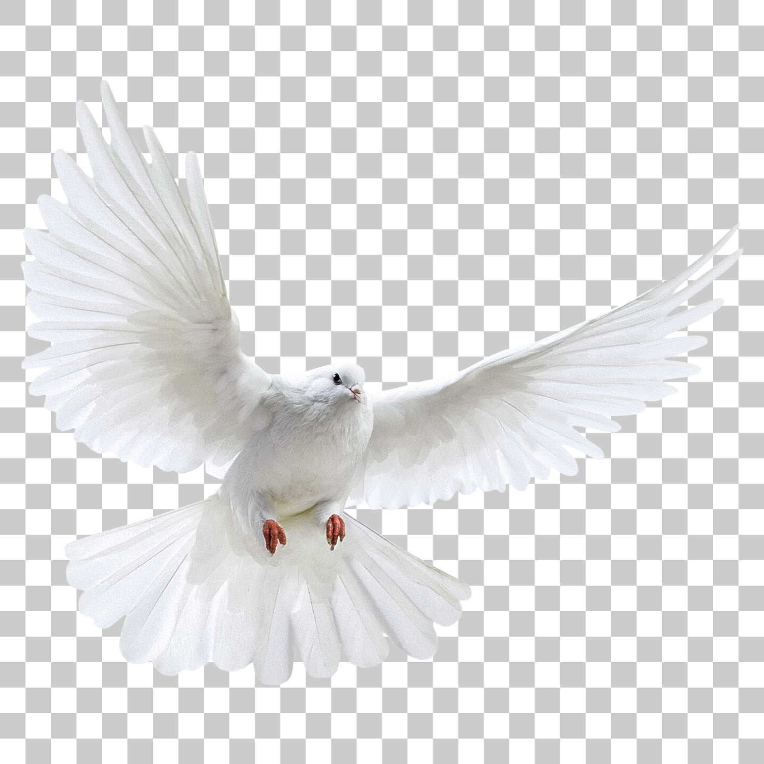 Dove Bird Png Image With Transparent Background Png Images Dove Images Studio Background Images