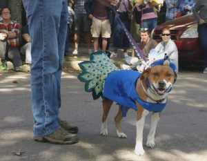Belle Mead Animal Hospital Sponsors Pet Masquerade Parade Read All About It Animals Pets Pet Adoption