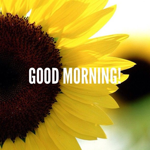 Good Morning Sunflower Good Morning Wishes Good Morning Images Good Morning Photos