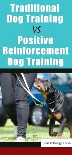 How To Train Your Dog To Stay By Your Side And Pics Of Tips For