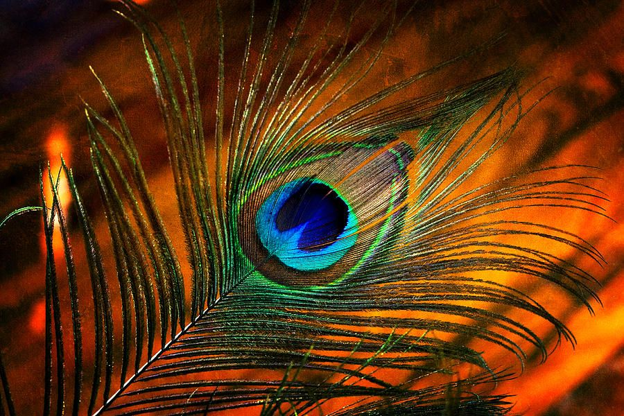 Peacock Feather By Pamela Huff Feather Wallpaper Peacock Feather Art Lord Krishna Wallpapers