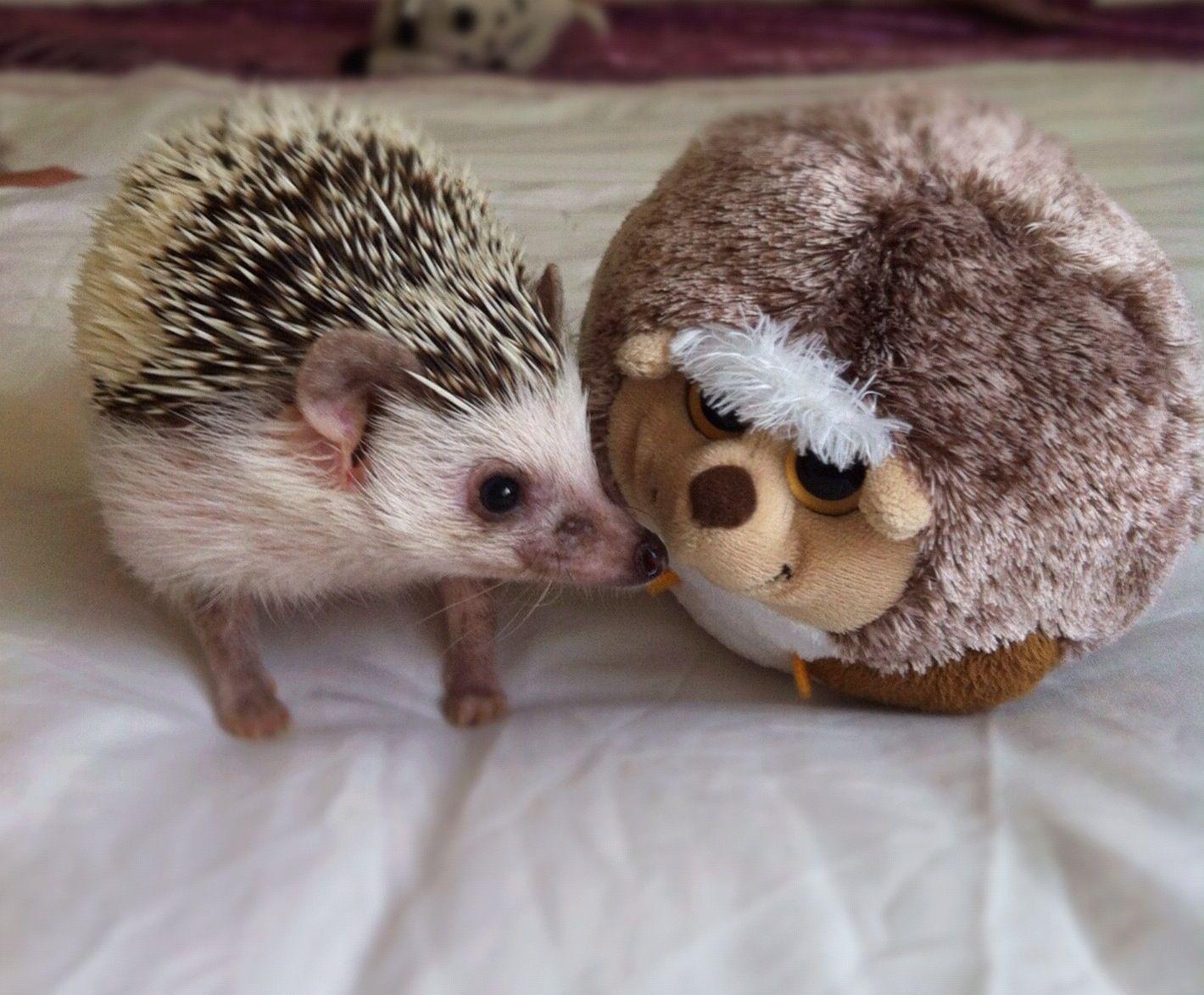 #hedgehog friends