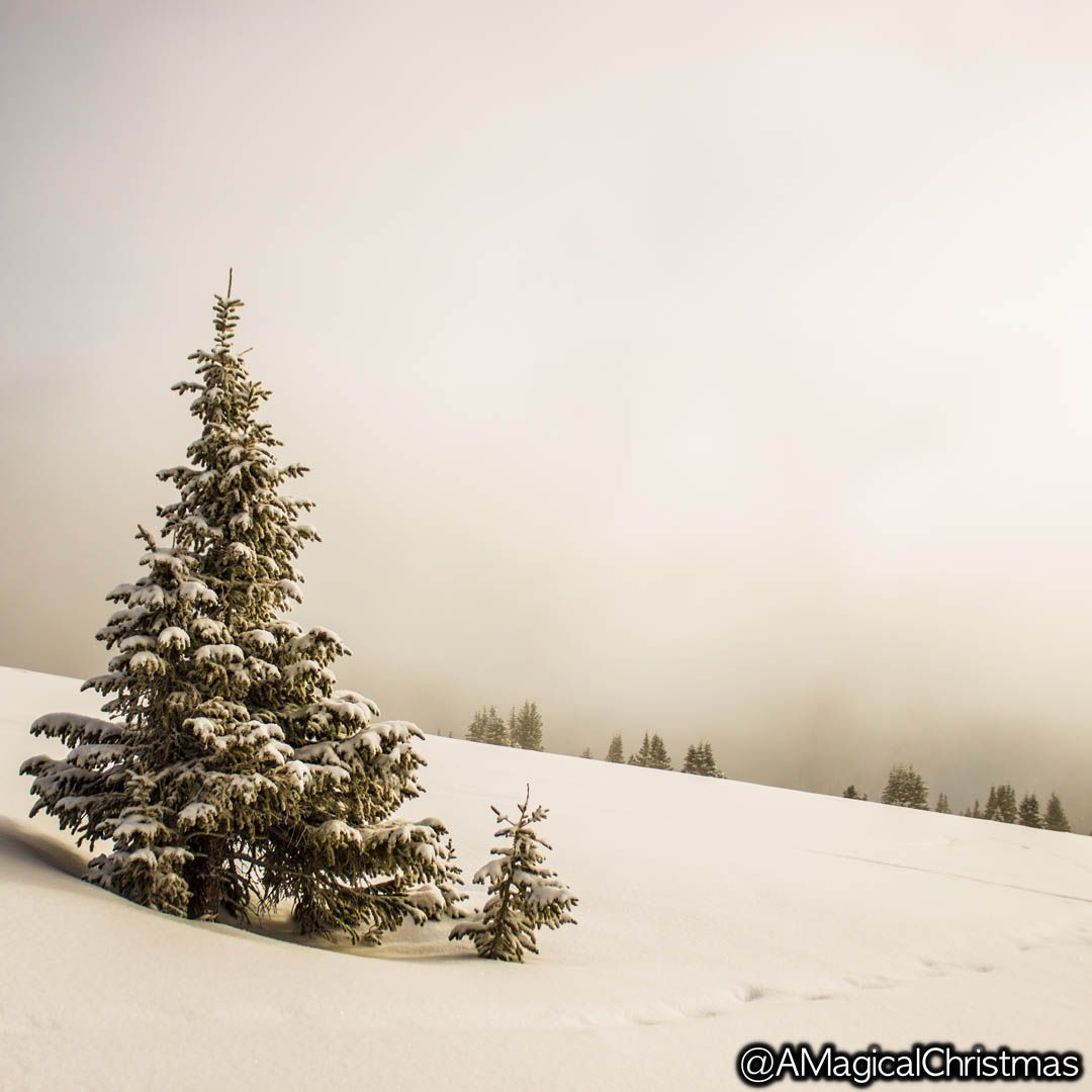 Beautiful #christmastree in the middle of a #winter wonderland.  #christmasmood #christmastime #waitingforchristmas
