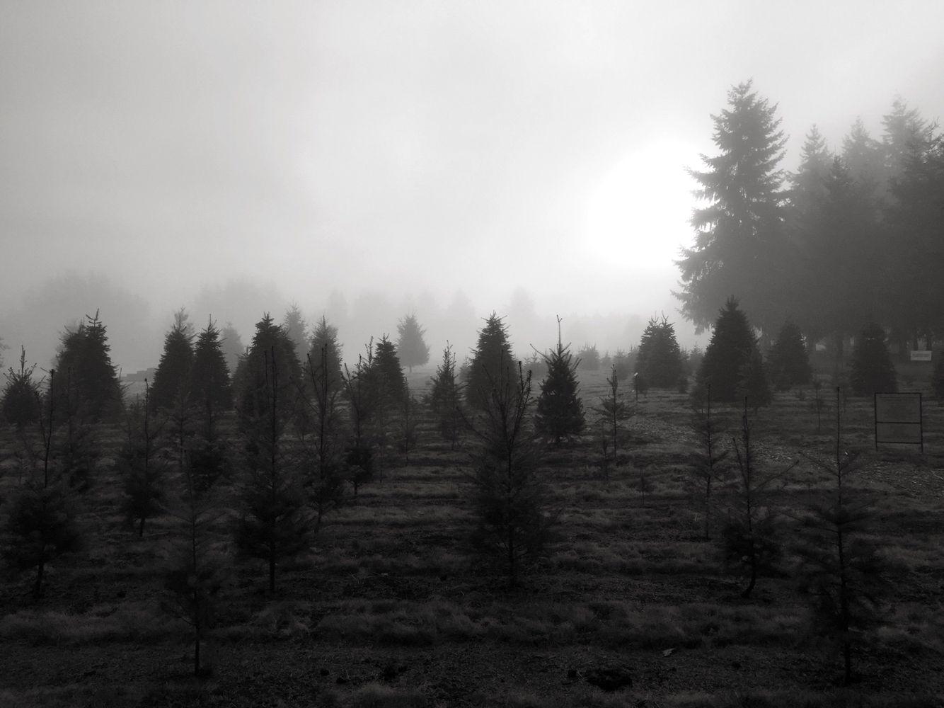 Misty morning in Oregon