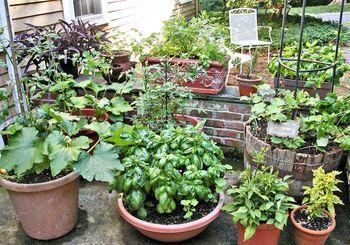Fast Growing Vegetables For An Instant Garden Indoor 400 x 300