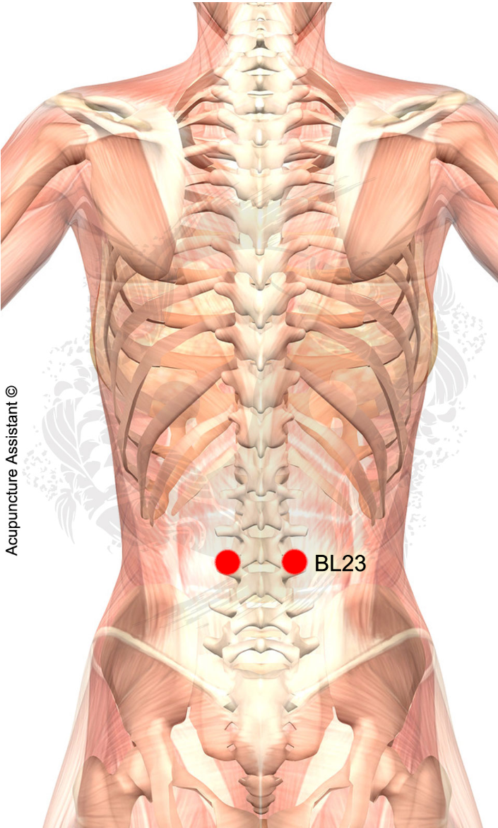 Bladder 23 General Treatment Point Localization 15 Cun Lateral To