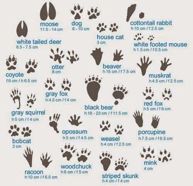 Animal Tracks and Scats Resource Guide - interpnet.com
