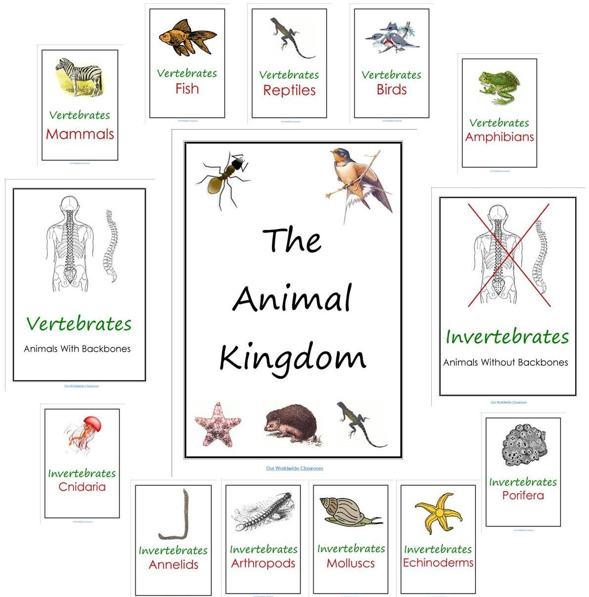 our worldwide classroom our animal kingdom notebooks with printable materials homeschool. Black Bedroom Furniture Sets. Home Design Ideas