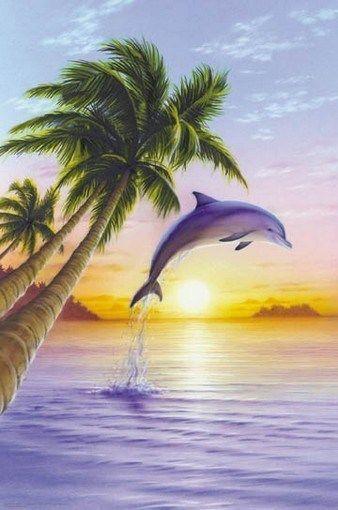 Details About Dolphin Jumping Motivational Poster Sunset Art