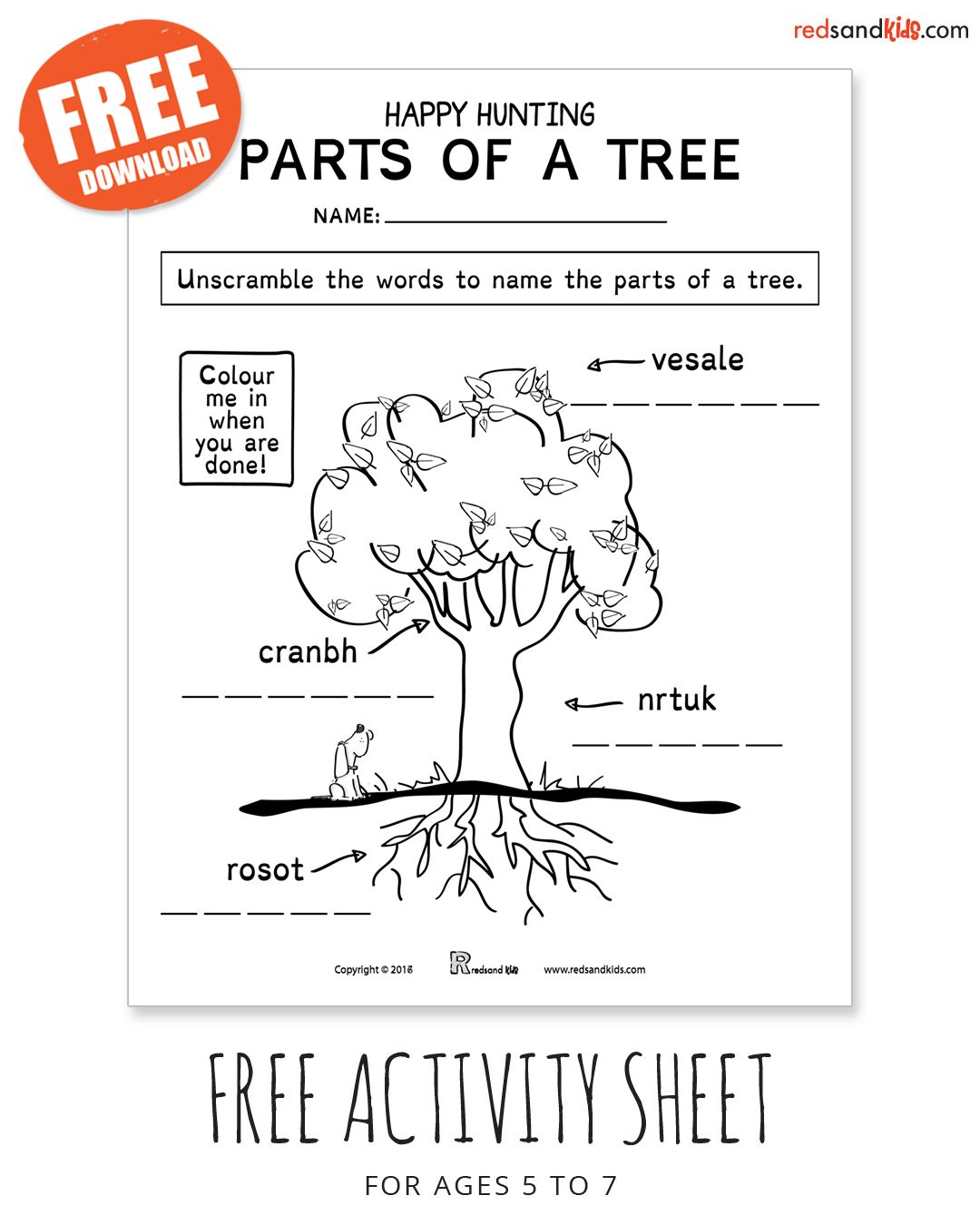 Free Parts Of A Tree Activity For Ages 5 To 7 Inspired