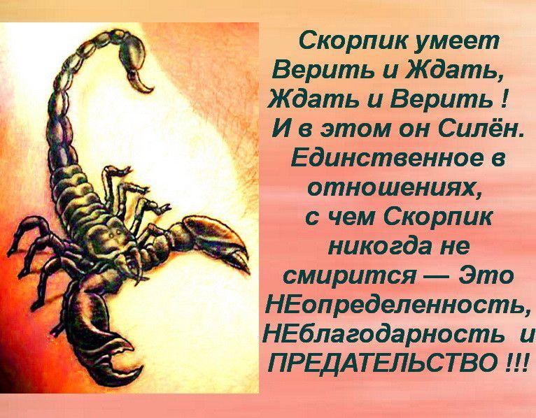 картинки про скорпионов по знаку наиболее простые