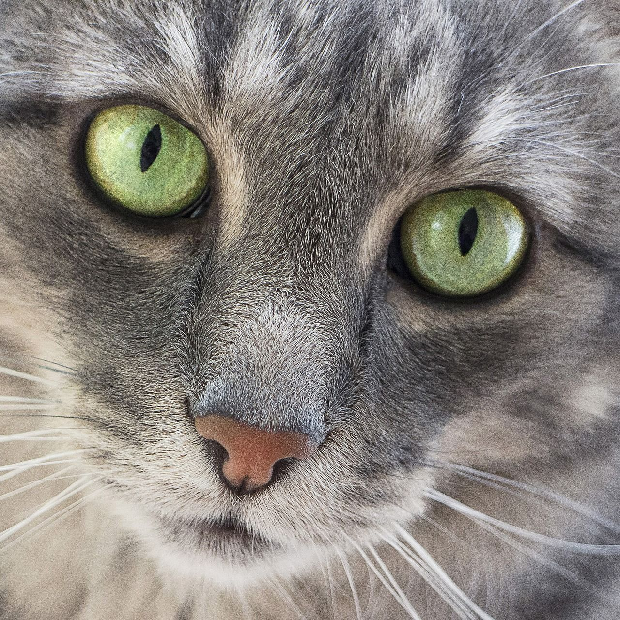 Obraz zdarma na Pixabay Kočka, Zelené Oči, Roztomilý