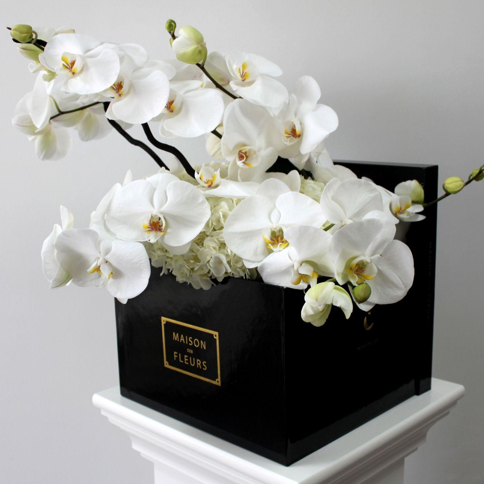 Maison Des Fleurs Phalaenopsis Orchids Luxury Flowers Orchid Arrangements White Orchids