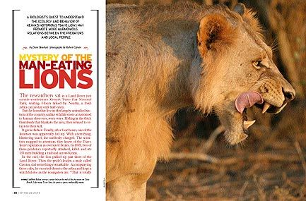 Jeanette's Big Blog of Animals: Lion cubs playing, cheetah ...  Man Eaten By Lion In Front Of Family