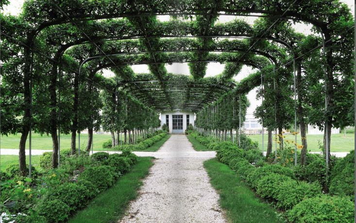 Isn'T This The Most Awesome Arbor. Or Espalier. Or Both!! | Garden