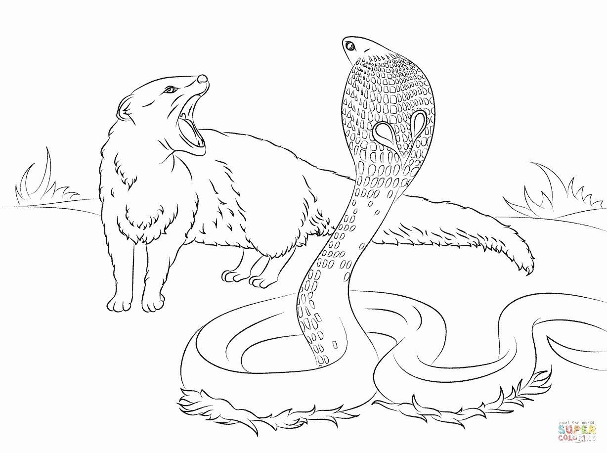 Free Adult Coloring Pages Animals In 2020 Animal Coloring Pages