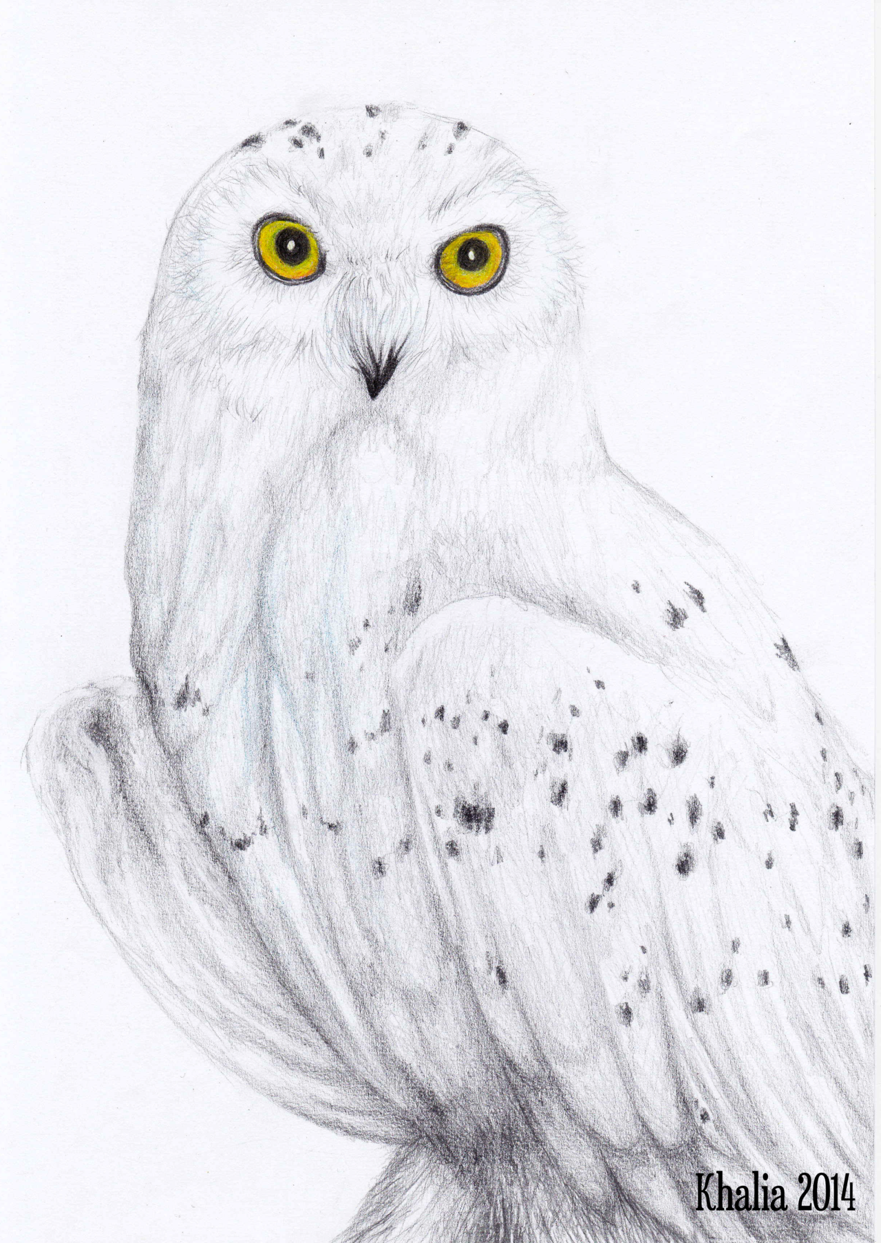 Snowy owl drawing by on for Owl drawing easy