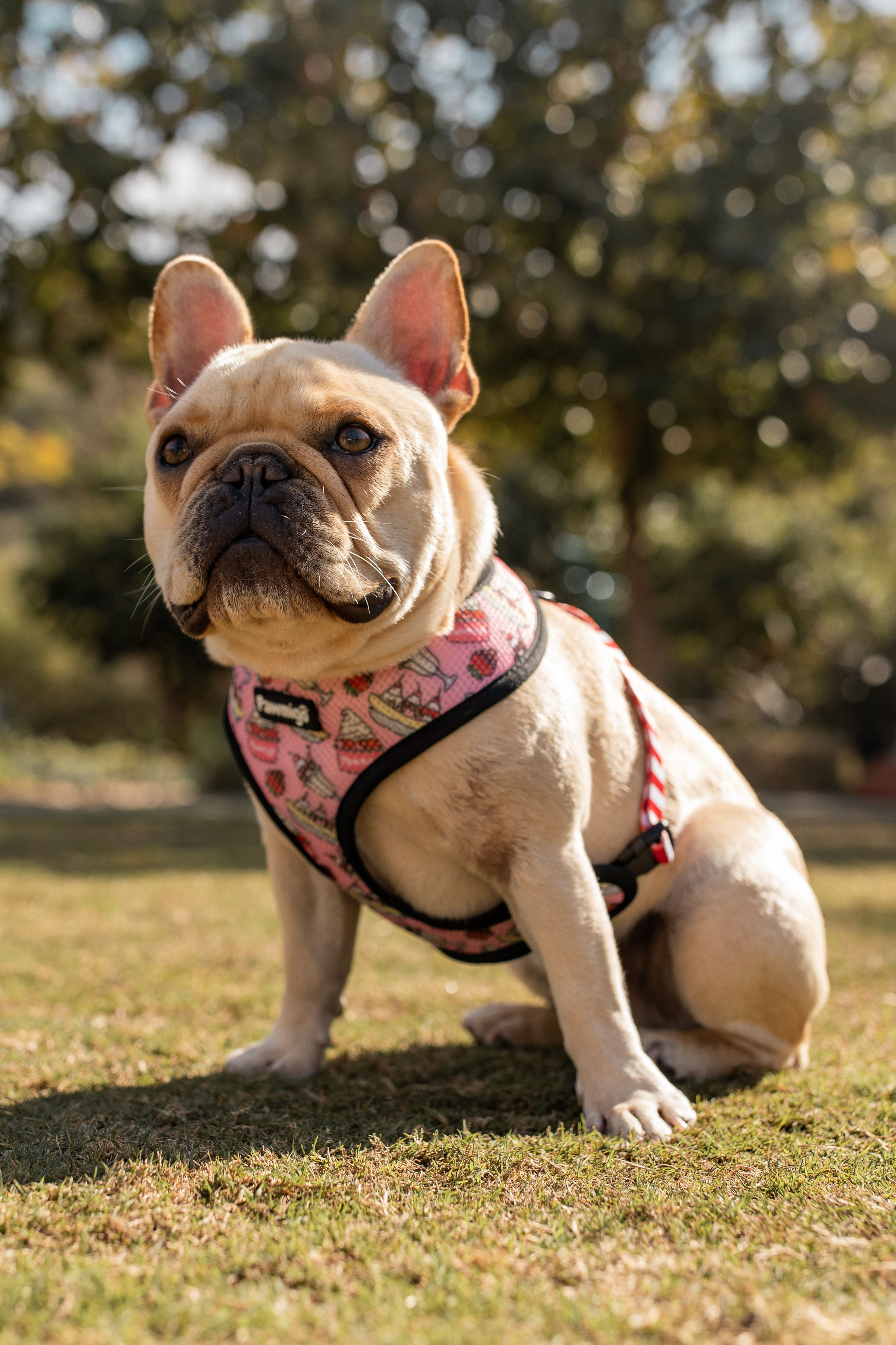 Saturday Chill Reversible Harness French Bulldog French