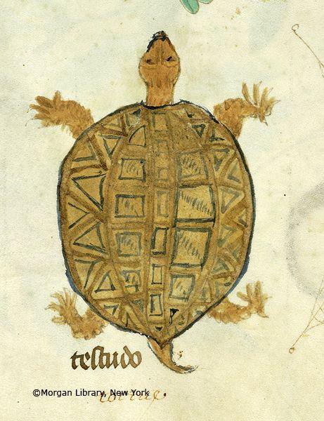 Image result for medieval manuscript turtle