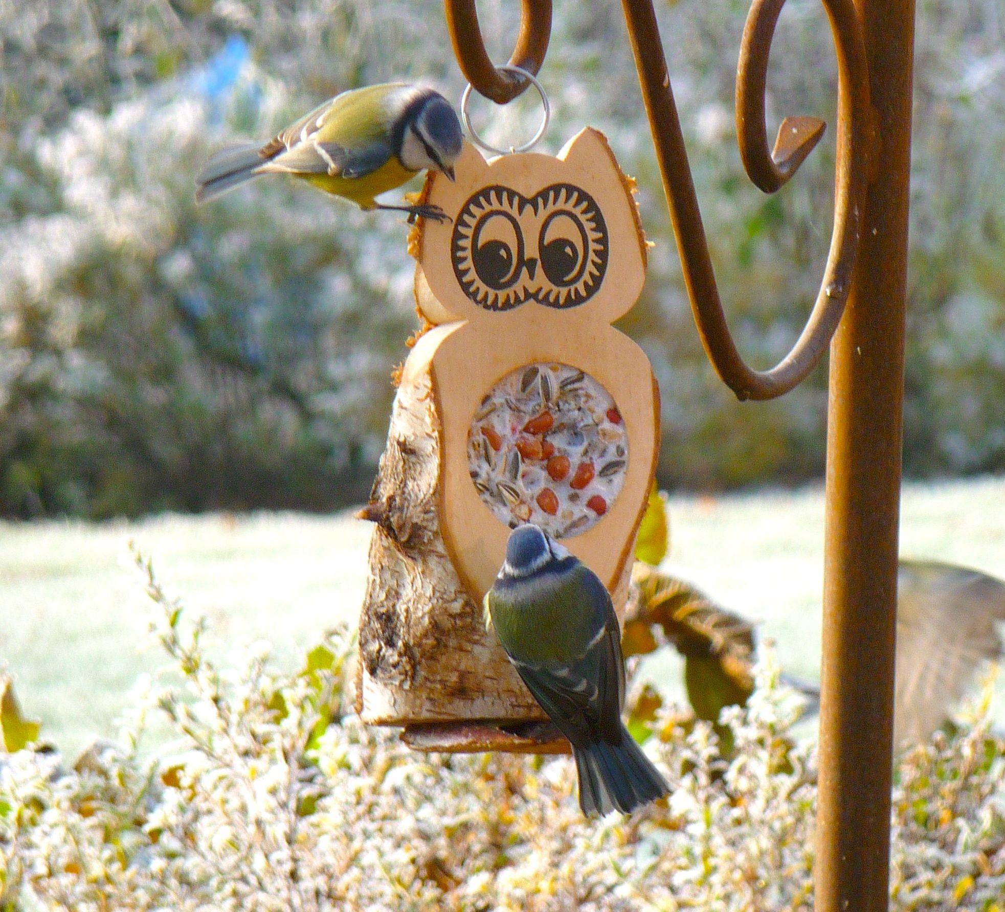 futtereule mit einem futterloch aus vogelfutter und rindertalg vogels insecten in de tuin. Black Bedroom Furniture Sets. Home Design Ideas