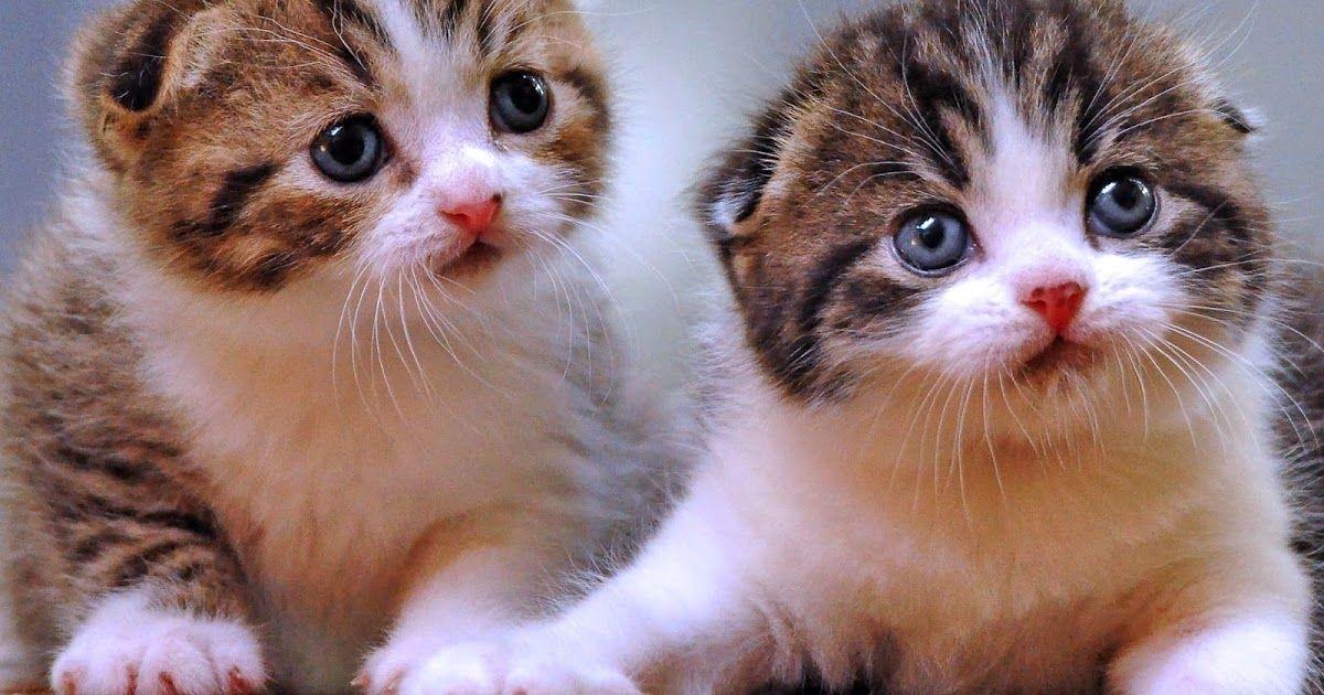 Menakjubkan 23 Download Gambar Kucing Lucu Bergerak Download Kumpulan 52 Gambar Dp Bbm Lucu Kucing Terupdate Gambar Di 2020 Binatang Foto Kucing Lucu Kucing Cantik