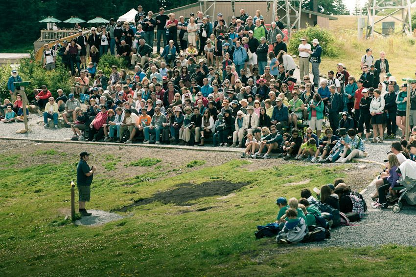 Crowds at the Birds in Motion show on top of Grouse Mountain.