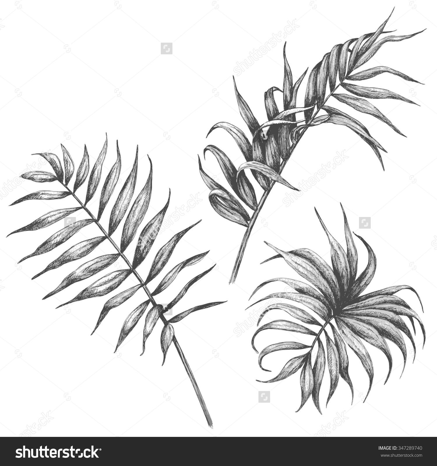 Uncategorized Leaves To Draw palm leaf drawing google search more