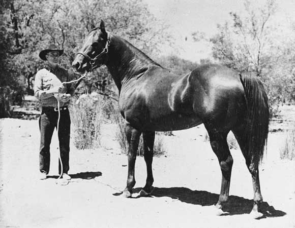 Parker S Trouble A 1949 Chestnut American Quarter Horse Stallion Put Patagonia Arizona On The Map And Greatly Infl Aqha Horses Horses American Quarter Horse