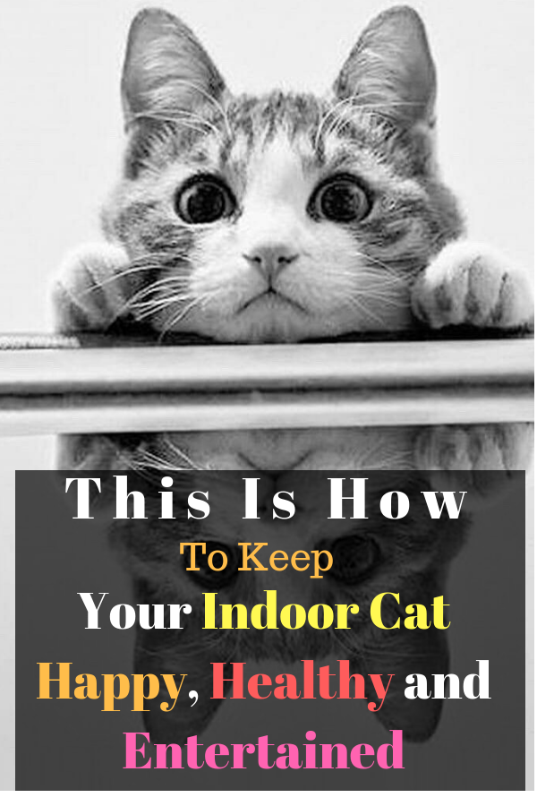 This Is How To Keep Your Indoor Cat Happy Healthy And Entertained Cats Puppy Care Low Maintenance Pets